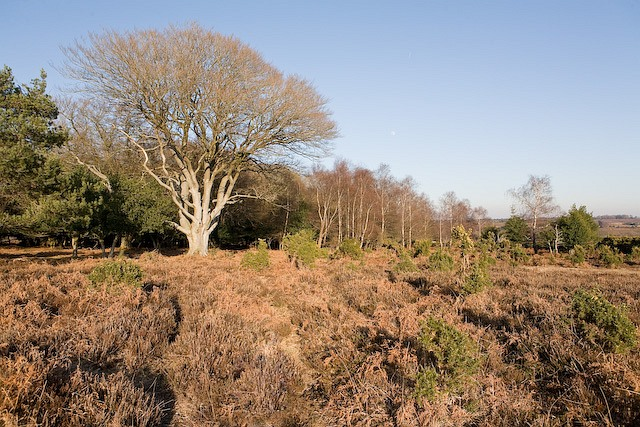 Southwest corner of Winding Stonard, New Forest