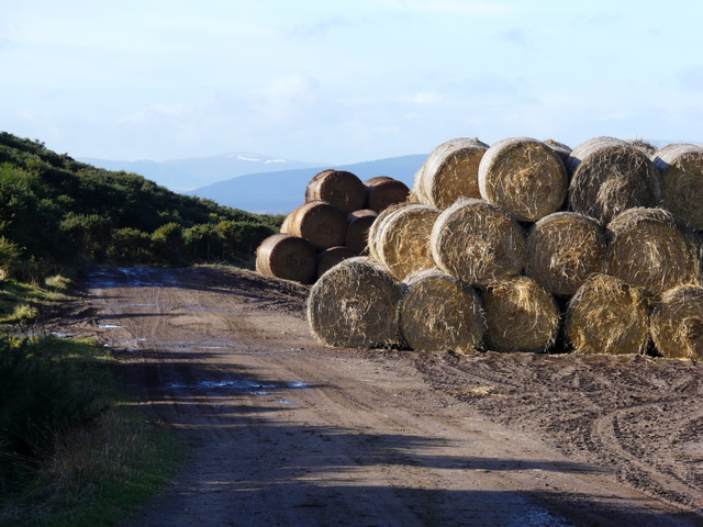 Bales at  Wester Rarichie: snow on the distant hills.