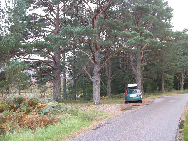 Scots Pines by the Glen Torridon road