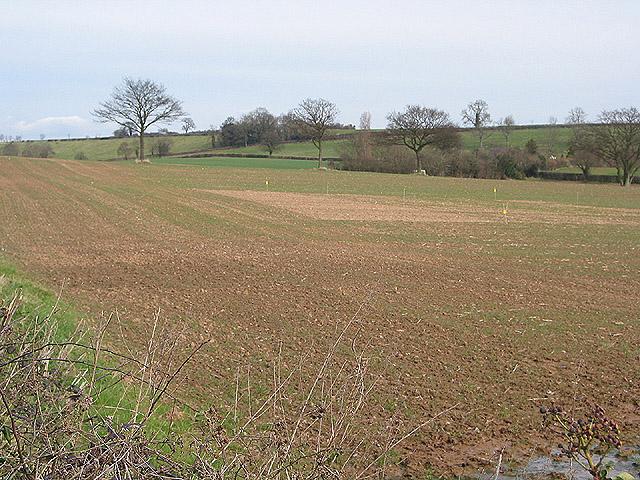 Arable land near Lyne Down