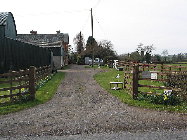 Fresh eggs at the farm gate