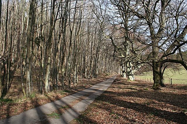 Beech Wood at Aikenway