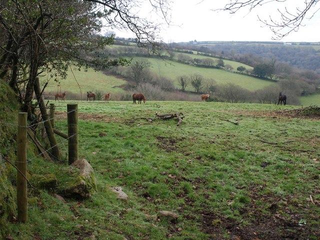 Field near Trenant