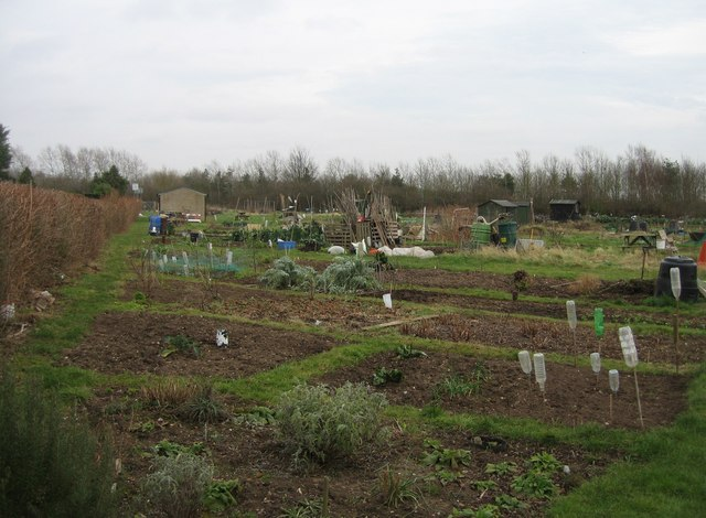 Trumpington allotments