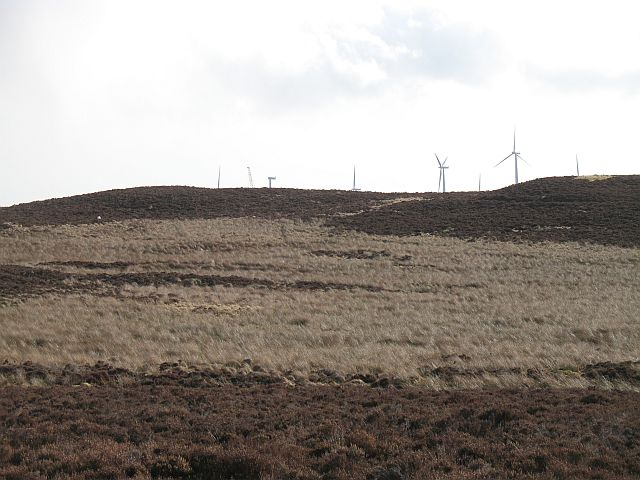 Forest of Alyth moorland