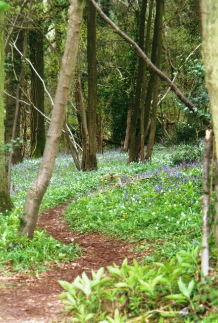 Offa's Dyke Path in Bigsweir Wood
