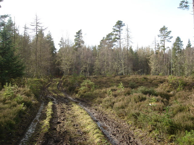 Boggy footpath in the depths of Moy Wood