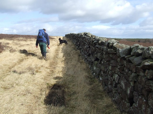 Dry stone Wall along  the eastern edge of Tranmire Bog