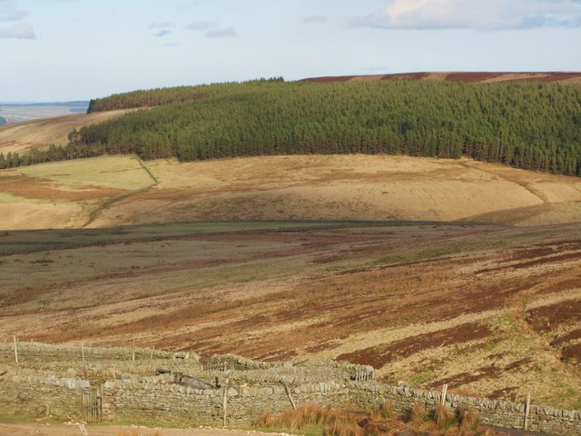 Sheepfold above Whitelees