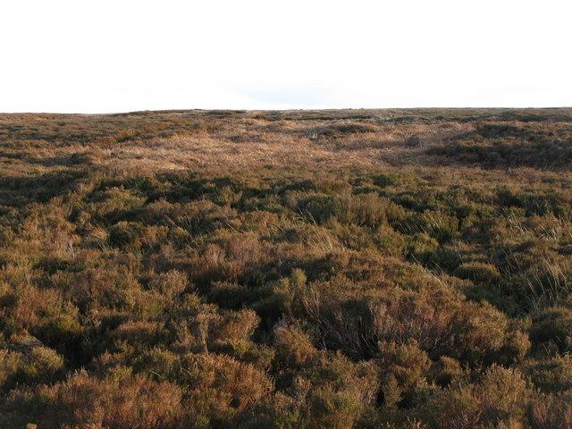 Ruffside Moor