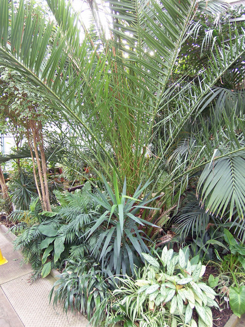 Tropical House in the Floral Hall, People's Park, Grimsby