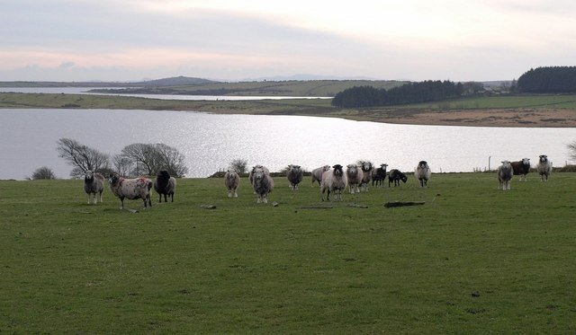 Sheep on Pinnockshill