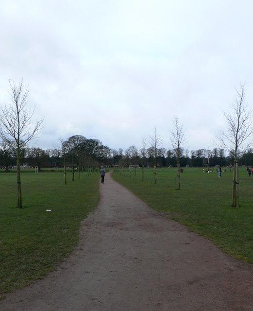 Avenue of Elm trees in Pontcanna Fields.