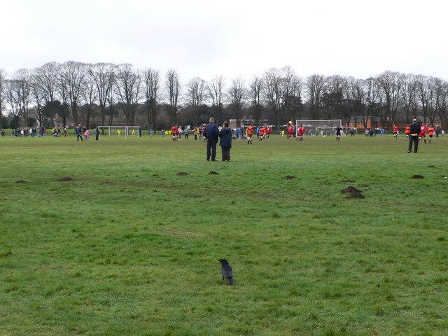 Pontcanna Fields, Cardiff