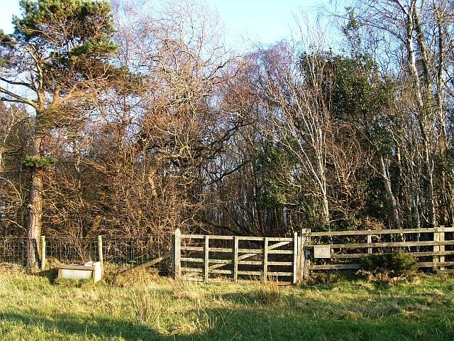 Brothybeck Wood, gate on west side