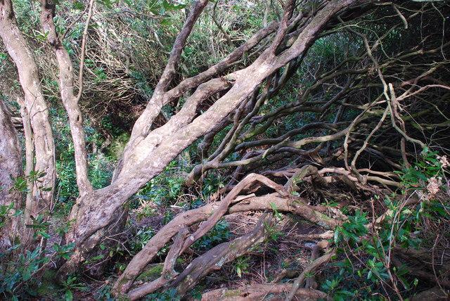 Y Gwyllt Portmeirion The Wild Wood