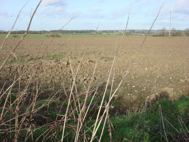 Field to the north of Borley