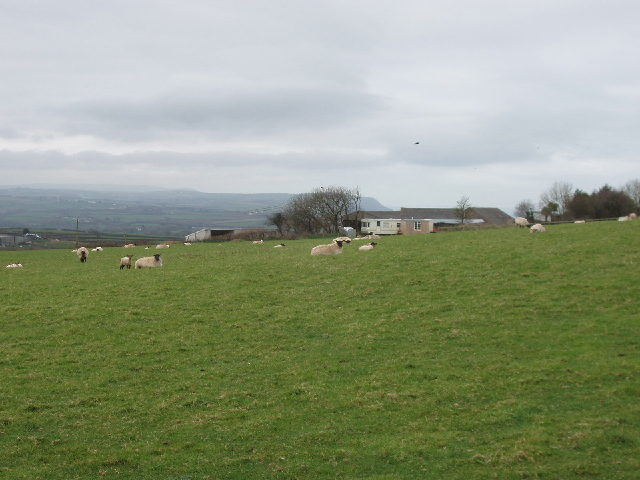 Thurlibeer farm and sheep, near Red Post