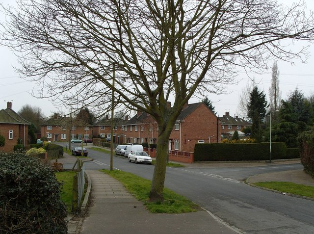 Solitary Sycamore Tree, Harwood Road
