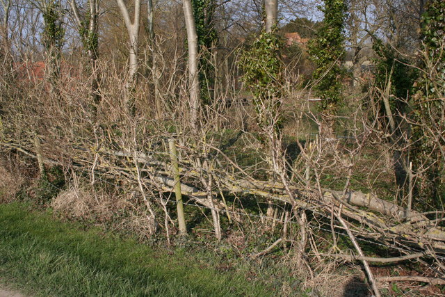 Traditional Hedge