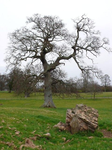 Hazelgrove House Park