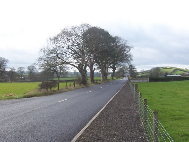 Trees on the Carnlough Road