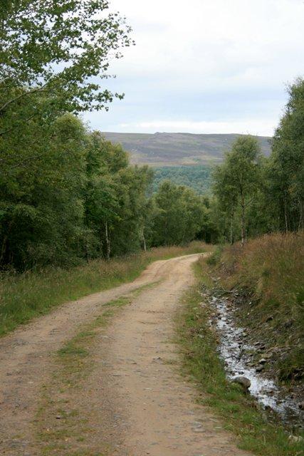Track to Wester Gorton
