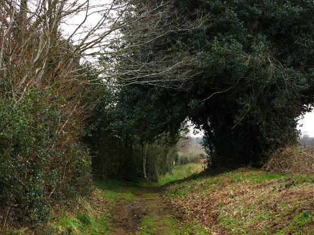 Brier Lane