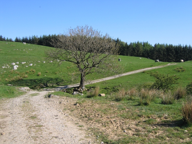 The Ribble Way crossing Coppy Gill