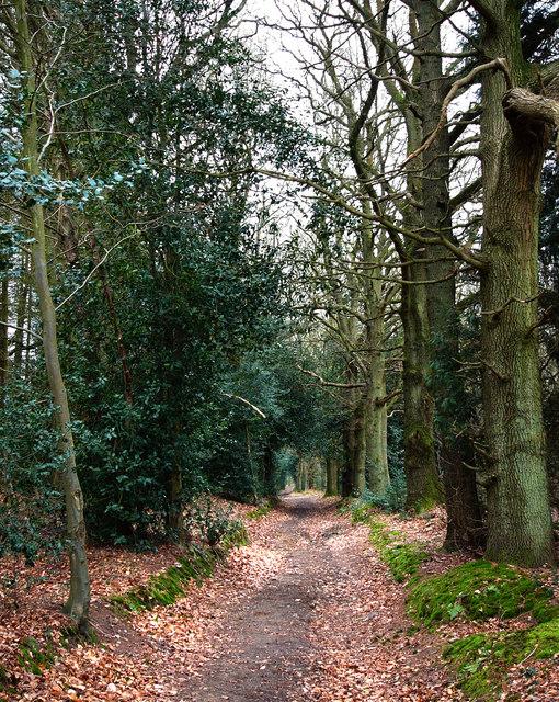 Green Lane in Holm Wood