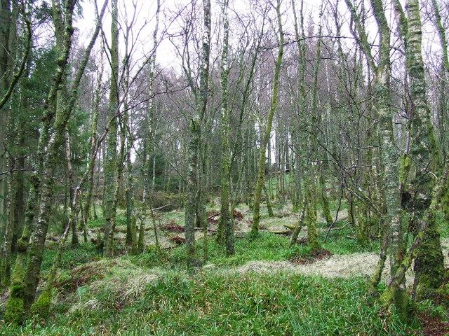 Square Wood