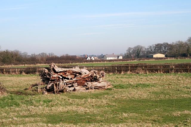 Old Tree Trunk, Hanley Hall Farm
