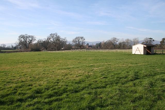 Paddock, Hanley Hall Farm