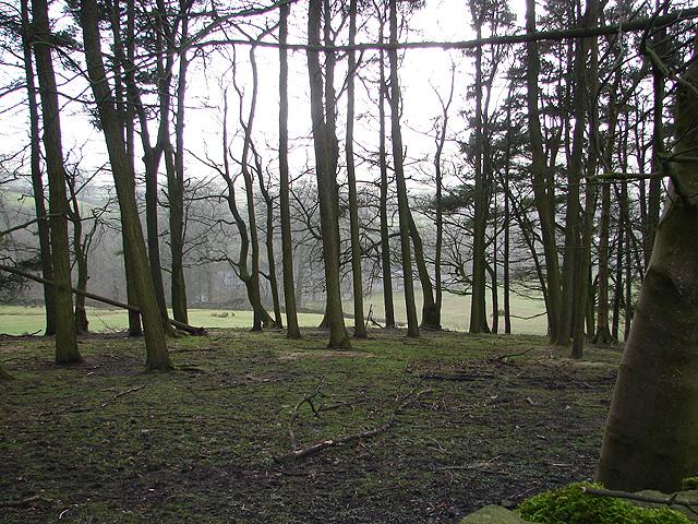 Woodland near Horton