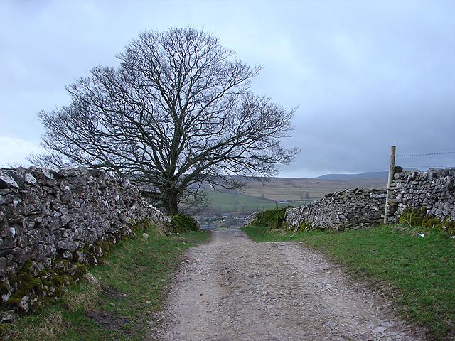 Tree beside the Pennine Way