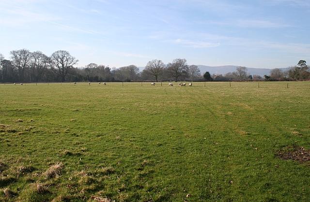 Sheep Pasture near Hanley Hall
