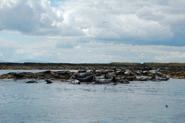 Outer Farne, with seals