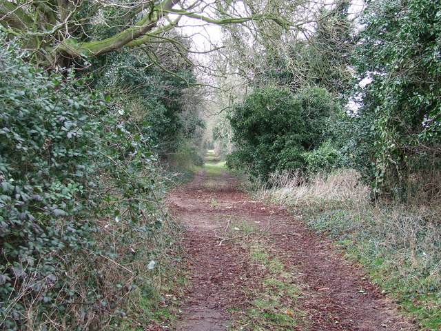 Hedge lined path
