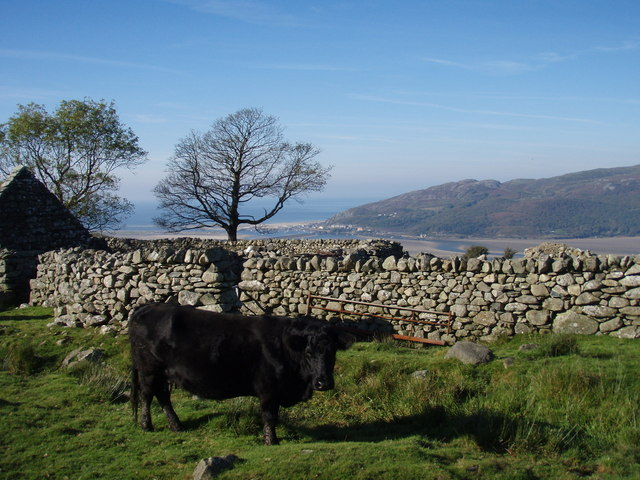 View to Barmouth (if you can get past the cows)
