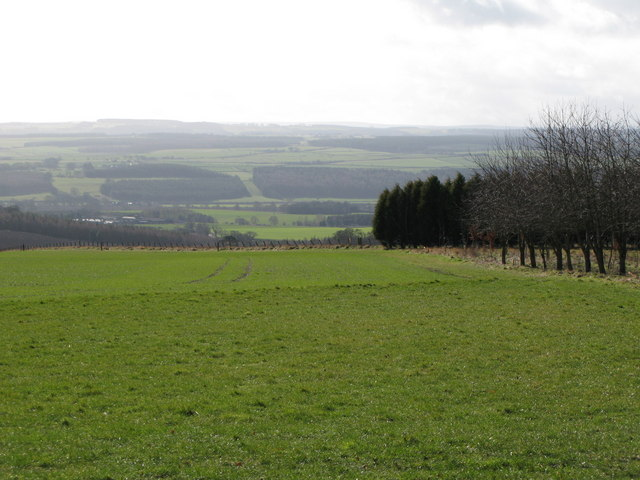 Pastures south of Mowden Hall