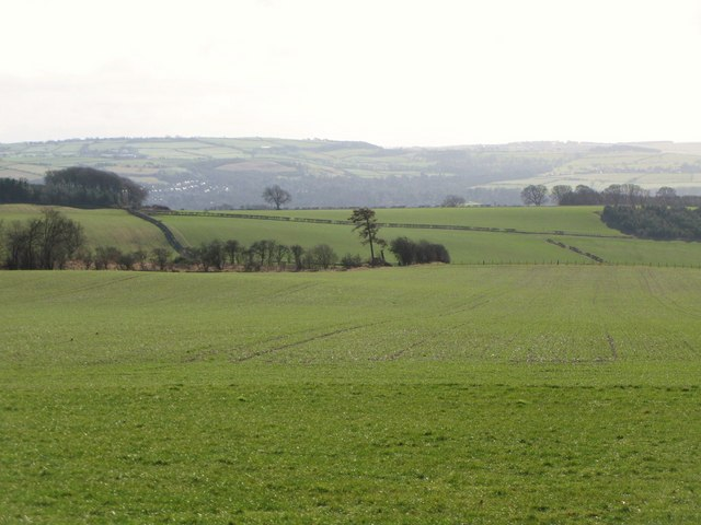 Pastures south of Mowden Hall (2)