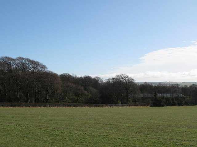 Pastures and woodland south of Mowden Hall