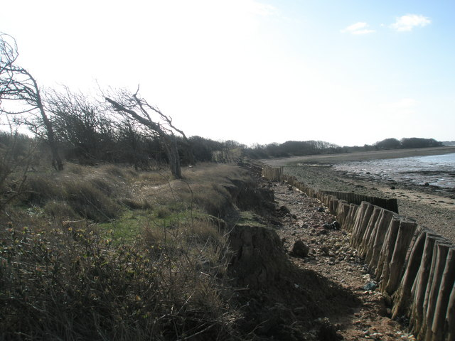 Windswept trees at North Hayling