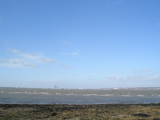 Birds scatter at North Hayling