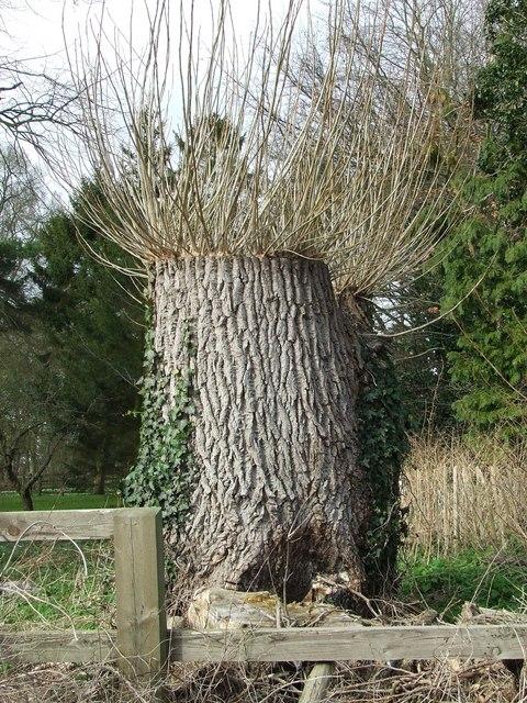 Hedgehog tree stump