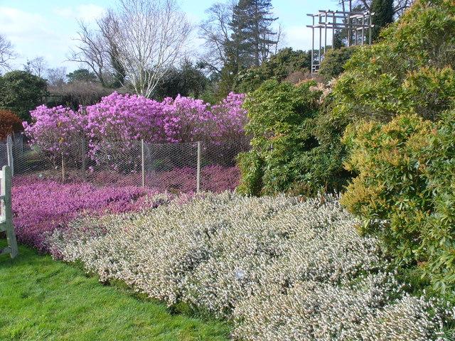 Heath Garden, Nymans
