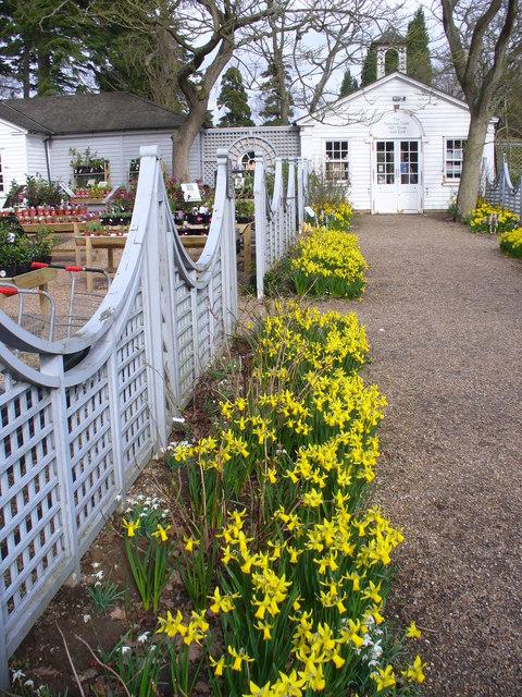 Spring at Nymans