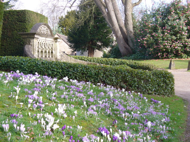 Crocuses at Nymans