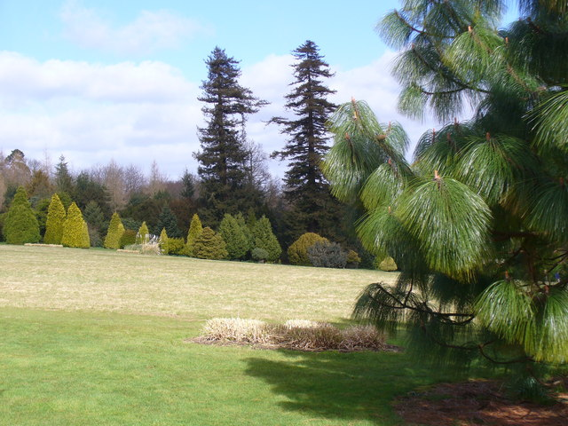 Nymans Pinetum