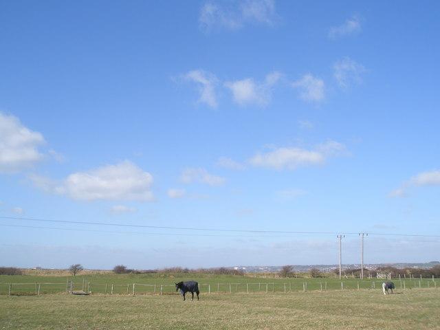 Horses at North Hayling